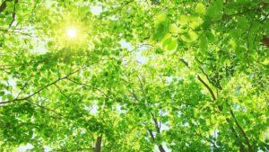 緑の葉と木漏れ日